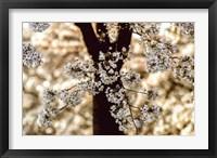Framed Spring Black