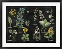 Botanical Floral Chart I Black and White Framed Print