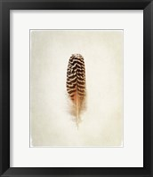 Framed Feather I