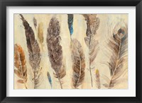 Feather Study Framed Print