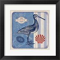 Sea Bird III Framed Print