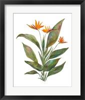 Framed Bright Bromeliad