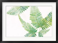 Ferns I Square Framed Print