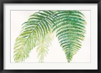 Ferns III Square Framed Print