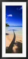 Framed Palm Tree Shadow, Tahiti, French Polynesia