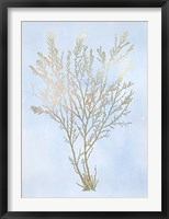 Gold Foil Algae I on Blue - Metallic Foil Framed Print
