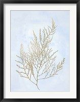 Gold Foil Algae II on Blue - Metallic Foil Framed Print