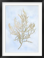 Gold Foil Algae III on Blue - Metallic Foil Framed Print