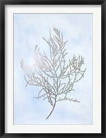 Silver Foil Algae III on Blue - Metallic Foil Framed Print