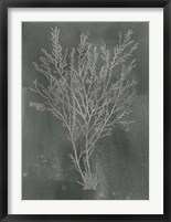 Silver Foil Algae I on Black - Metallic Foil Framed Print