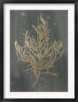 Gold Foil Algae III on Black - Metallic Foil Framed Print