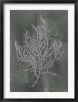 Silver Foil Algae III on Black - Metallic Foil Framed Print