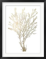 Gold Foil Algae I - Metallic Foil Framed Print