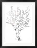Silver Foil Algae I - Metallic Foil Framed Print