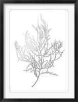Silver Foil Algae III - Metallic Foil Framed Print
