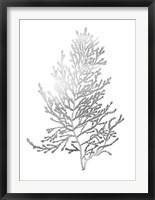 Silver Foil Algae IV - Metallic Foil Framed Print