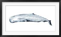 Whale Portrait II Framed Print