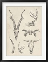Skull & Antler Study I Framed Print