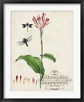 Canna & Dragonflies II Framed Print