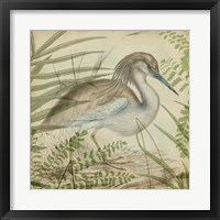 Heron & Ferns II Framed Print