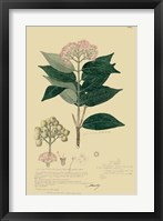 Descubes Tropical Botanical I Framed Print