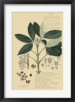 Framed Descubes Tropical Botanical II