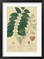 Descubes Tropical Botanical III Framed Print