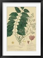 Framed Descubes Tropical Botanical III