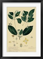 Descubes Tropical Botanical IV Framed Print