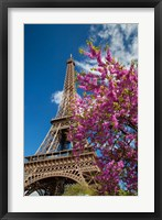 Framed Pink Tree by the Eifel Tower