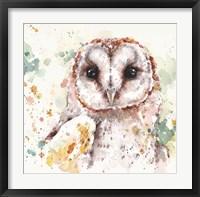 Framed Australian Barn Owl