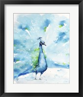 Framed Peacocking Around