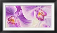 Framed Purple Orchids