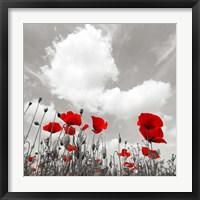 Framed Papaveri e Nuvole