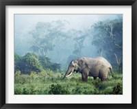 Framed African Elephant, Ngorongoro Crater, Tanzania