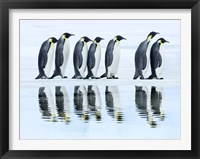 Framed Emperor Penguin Group, Antarctica