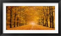 Framed Woods in Autumn