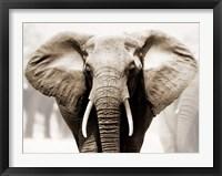 Framed African Elephant