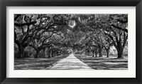 Framed Tree Lined Plantation Entrance,  South Carolina
