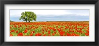 Tree in a Poppy Field 1 Framed Print
