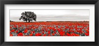 Tree in a Poppy Field 2 Framed Print