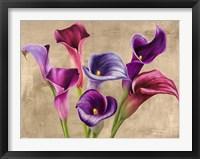 Framed Multi-colored Callas