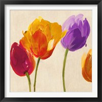 Tulips & Colors (detail) Framed Print