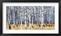 Framed Birch Grove in Autumn