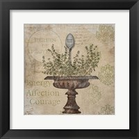 French Thyme Framed Print