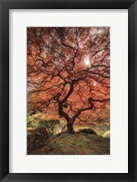 First Colors Of Fall II Framed Print