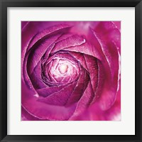 Ranunculus Abstract I Color Framed Print