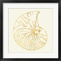 Coastal Breeze Shell Sketches VII Framed Print