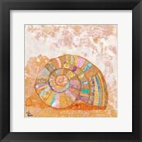 Spiral Seashell Framed Print