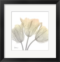 Sunday Morning Tulips Framed Print
